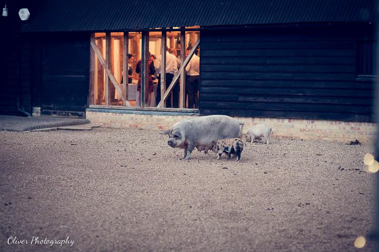 Animals at South Farm